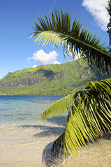 Beautiful beach in Papetoai, Moorea, French Polynesia