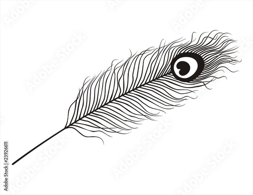 Peacock Feathers Quotes Peacock Feather Stock Image