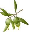 ramo d'ulivo