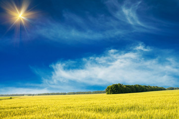 Splendid green field and the blue sky with sun.