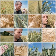 composition agriculture céréalièire