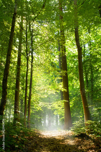 Panel Szklany Wald und Nebel
