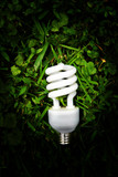 efficient light bulb in green grass