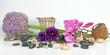 Blumen und Steine