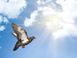 dove in blue sky under sun