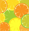roleta: seamless template of sliced Grapefruit, lemon and orange