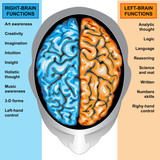 Fototapety Human brain left and right functions