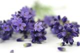 Fototapety Lavendelblüten