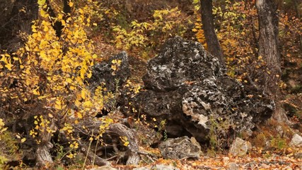 wood landscape of porous stones and trees