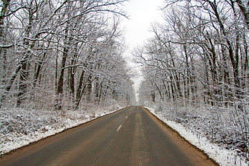 Road in the forest in the Winter