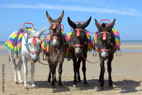 Fotobehang Ezel Donkeys at a beach resort in UK