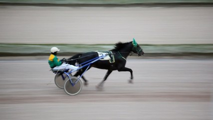 jockey sits in carts and operated thoroughbred horse