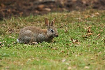 Cute bunny rabbit on grass