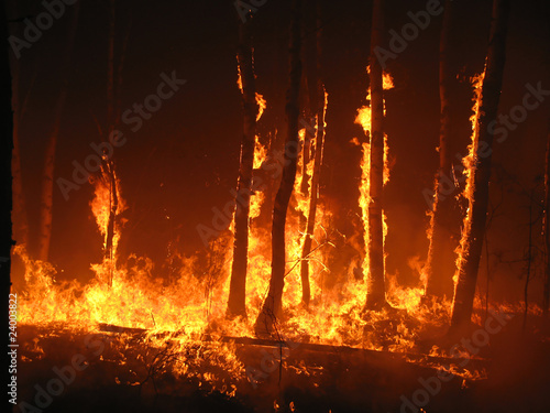 canvas print picture Burning trees in the forest