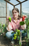 girl picking  green pepper  in the hothouse