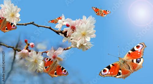 Kirschblütenzweig mit Schmetterlingen