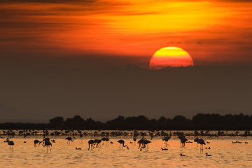 puesta de sol con flamencos