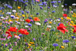 Meadow flowers with corn flower, poppy . . .