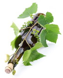 Bottle of wine twined with  vine. poster