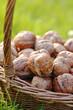 panier de noix dans l'herbe
