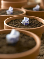 Rolls of twenty Euro banknotes growing in flowerpots