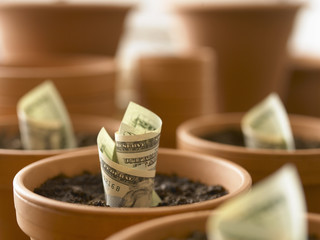 Rolls of twenty dollar bills growing in flowerpots