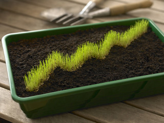 Grass in bin of dirt forming ascending graph