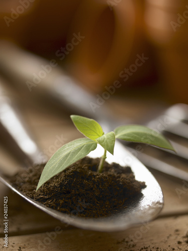 Close up of seedling growing in dirt on trowel