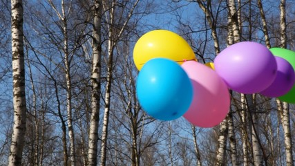 multicoloured balloons waving by wind on bush in spring forest