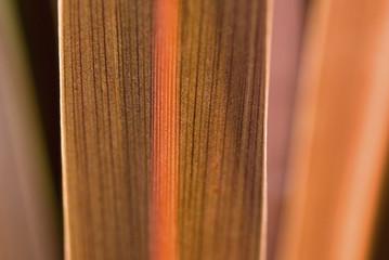 Close up of flax leaf