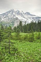 """Mt. Rainier and valley in Mt. Rainier National Park, Washington"""