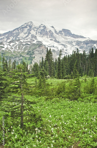 """Mt. Rainier and valley in Mt. Rainier National Park, Washington"""