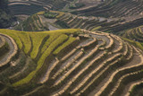 """Rice terraces, Lonji, China"""