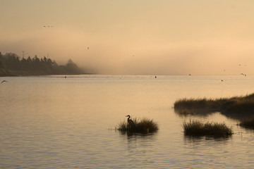 """Fog and heron, North Rustico, Pei, Canada"""