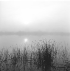 """Fog, sun and reeds, San Joaquin delta, California"""