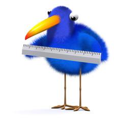 3d Blue bird measuring