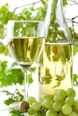 vino torrontes