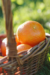 basket of clementines in the grass