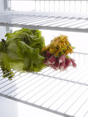 vegetables in the refrigerator