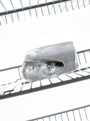 mackerel in a block of ice in the refrigerator