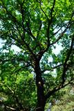 slender forest tree poster