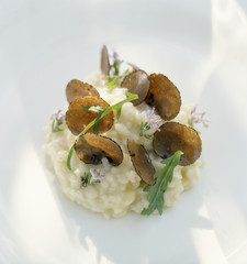risotto with alba truffles