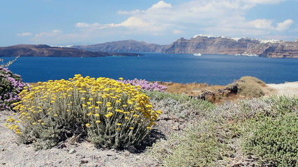 Flowers In Santorini, Greece
