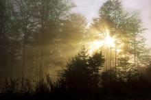 Forêt à l'aube avec le soleil qui brille à travers les arbres.