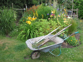 wheelbarrow in summer