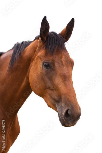 Fototapeten,pferd,tier,hintergrund,schönheit