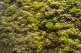 Algae Bubbles poster