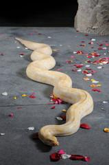 Python auf Rosen
