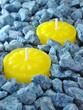 Ceri a base di olio di citronella
