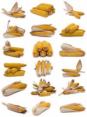 Colección de mazorcas de maíz.